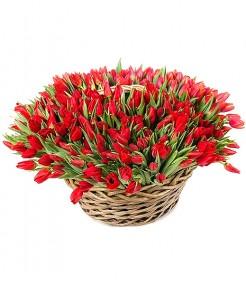 301 Тюльпан